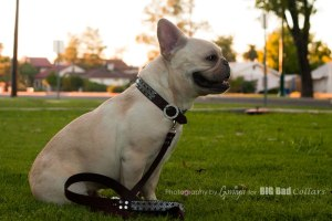 Wedding Dog Collars Big Bad Collars (16)