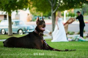 Wedding Dog Collars Big Bad Collars (19)