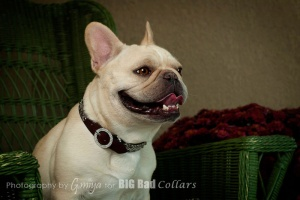 Wedding Dog Collars Big Bad Collars (2)