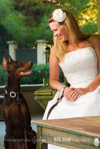 Wedding Dog Collars Big Bad Collars (5)